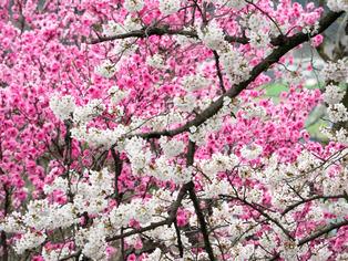 春の坂道8