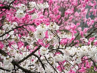 春の坂道12