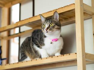 1025愛猫2