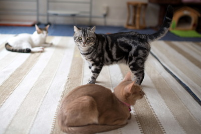 猫カフェ・レオン9