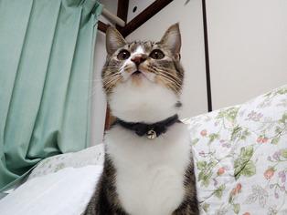 1024愛猫3