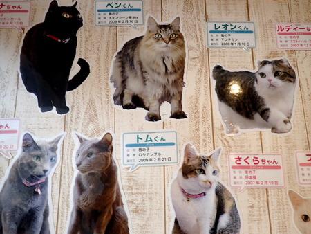 猫カフェれおん26