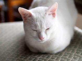 1025愛猫16