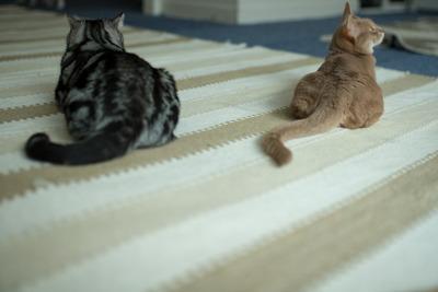 猫カフェ・レオン23