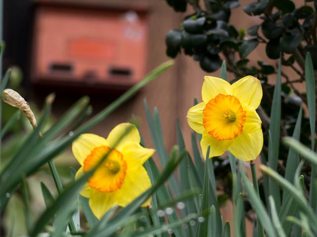 春の坂道15