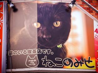 猫喫茶・ねこのみせ