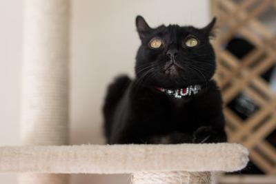 猫カフェ・レオン12