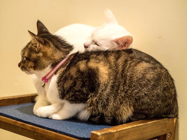 1025愛猫13