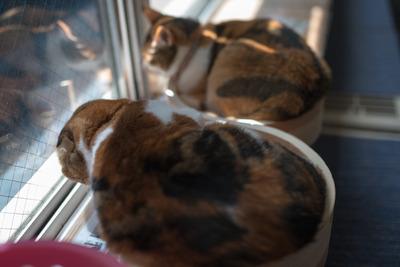 猫カフェ・レオン24