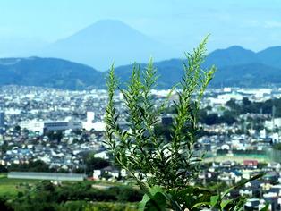 弘法山公園(27年9月)