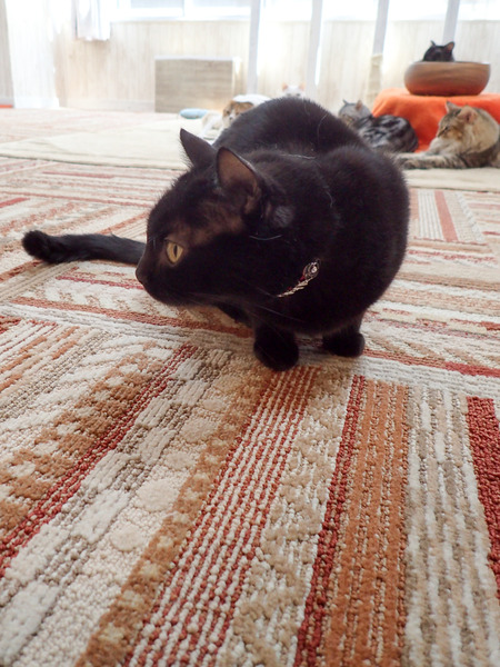 猫カフェれおん24