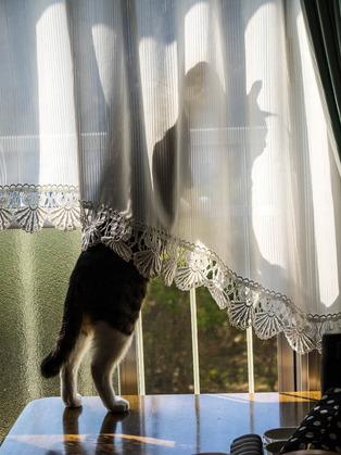 きょうの愛猫