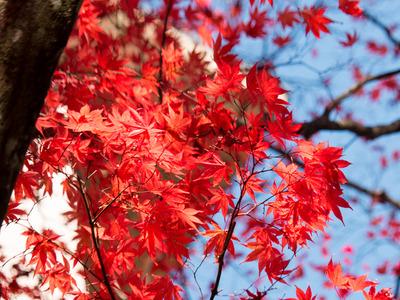 紅葉黄葉14