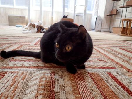 猫カフェれおん11