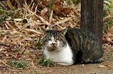 三つ池公園の猫