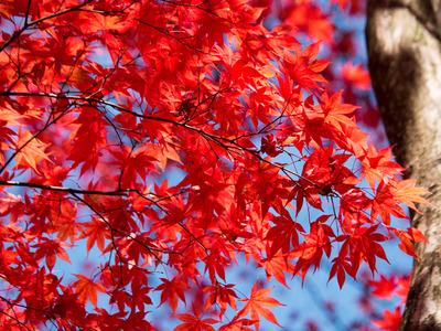 紅葉黄葉4