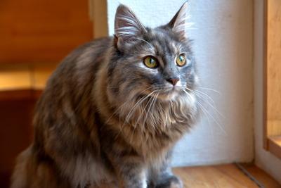 Cattail4