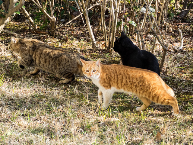 野良猫12