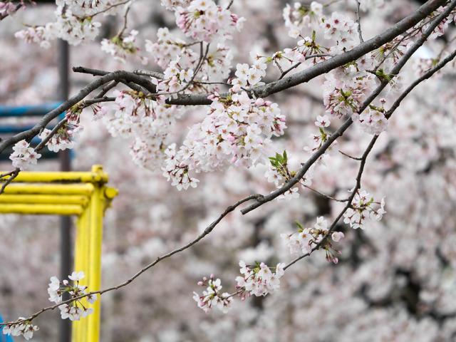 春の坂道2