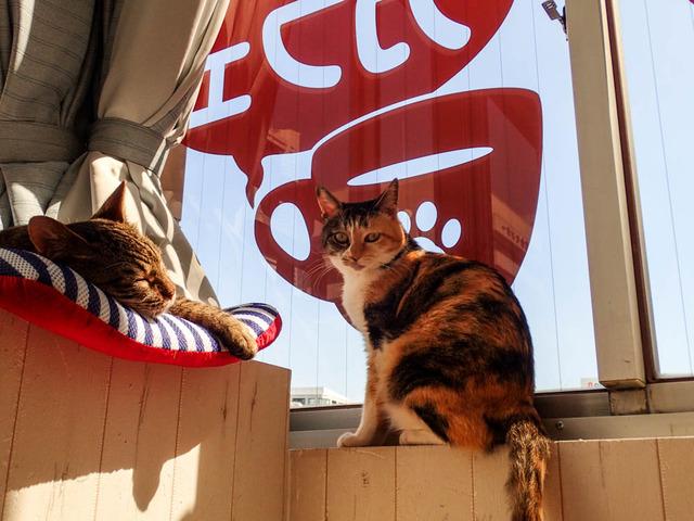 猫カフェ05