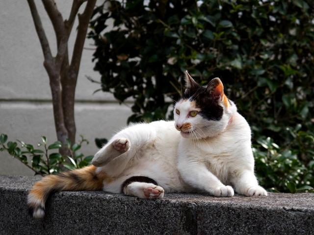 きょうの猫ちゃん