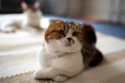 猫カフェ・レオン11