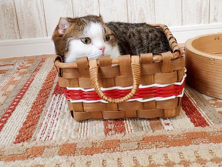 猫カフェれおん3