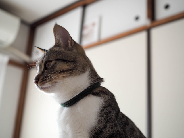 美斗くん6