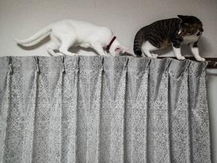 愛猫たち11