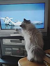 テレビ好きなの?りとちゃん