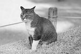 松本城の猫