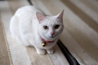 猫カフェ・レオン4