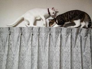 愛猫たち13