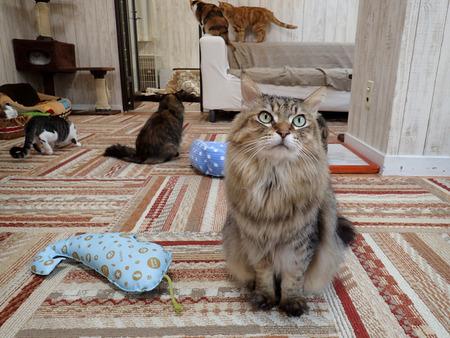 猫カフェれおん17