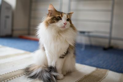 猫カフェ・レオン7