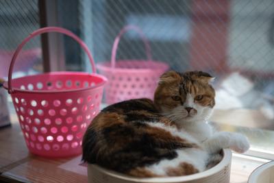 猫カフェ・レオン2
