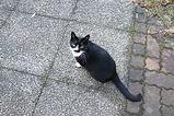 国営昭和記念公園の猫