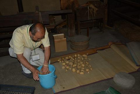 ジャガイモの収穫7