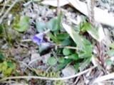 2009-03-20_13-18