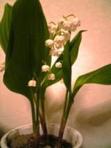 2009-03-16_19-38