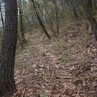 居谷里山に続く樹林帯の登山道