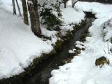 雪をかぶった春の小川