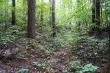 雑木林の中を進む