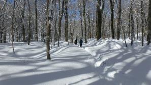 ブナの森歩き