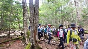 下りは木の根やゴロゴロ岩に注意しながら進みます