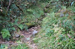 ゴロゴロ岩や苔むした登山道です