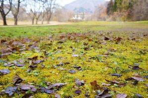 苔の緑がが目立っていました
