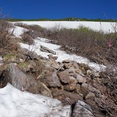 雪渓の取りつきは雪が消えかけています
