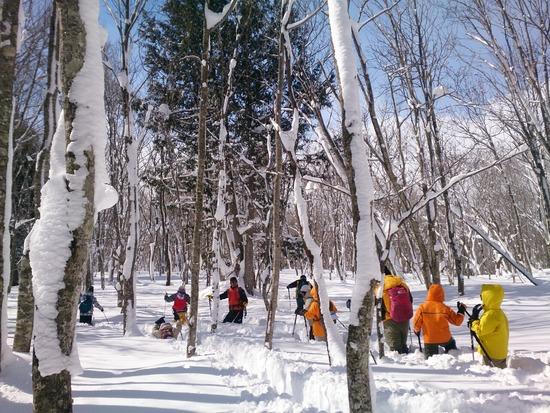 「ねずこの森」は腰までの深雪!