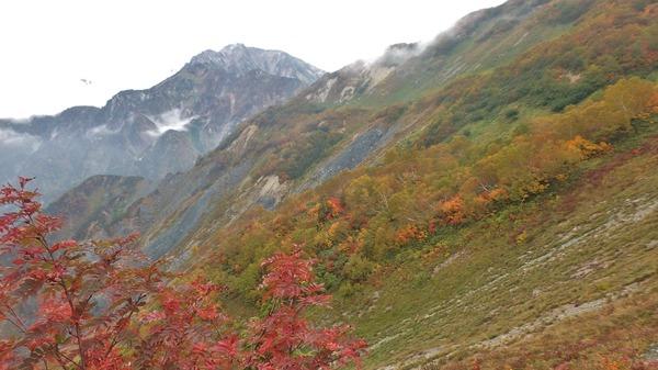 山肌の色づきと五竜岳